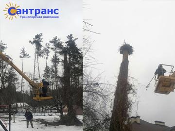 Восстановление гнезда с птенцами аиста, которое упало на территории санатория в пригороде Киева